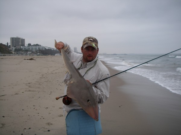 Shovelnose Guitar fish