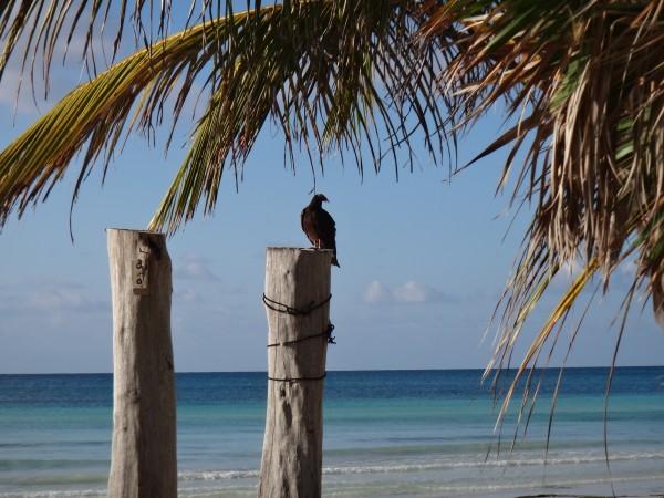 Bahamas 2013 122