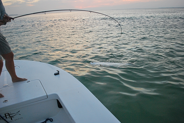 Tarpon to the Boat