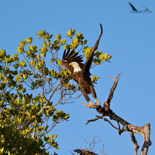 eagle-2sw