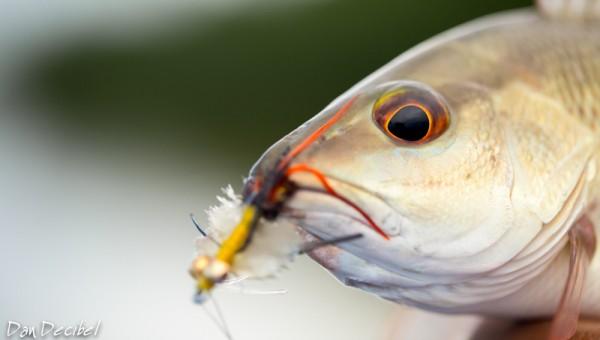FISH4Work-10