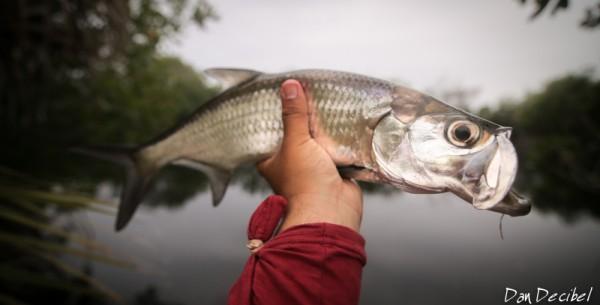 FISH4Work-2