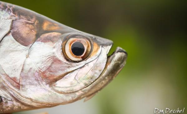 FISH4Work-4