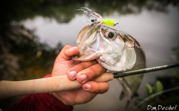 FISH4Work